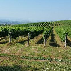 Регион с вековни лозаро-винарски традиции