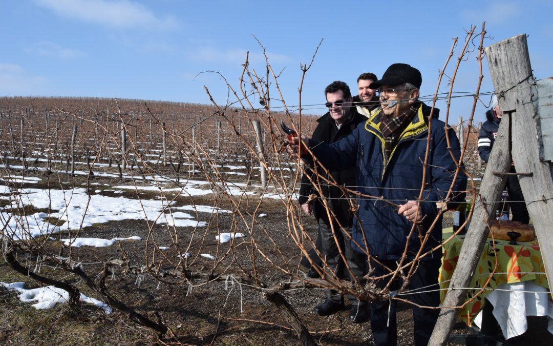 Blessing of the vines